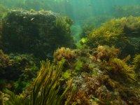 Descubriendo fondos marinos