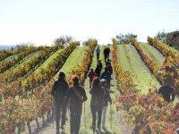 Recorriendo las viñas
