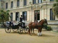 马车为婚礼问价格