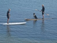 Prendendo il cane sul paddle board