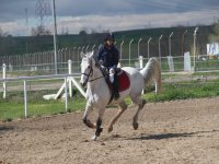 Controlling the horse's gallop