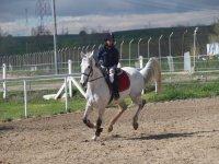 Controlando el galope del caballo