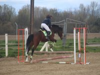Show jumping class