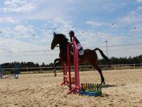 克服障碍物与马