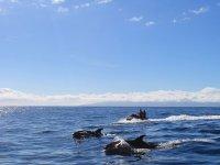 Motos de agua y cetaceos