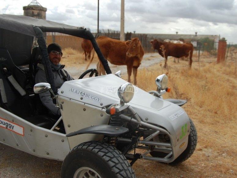 牛群中的越野车