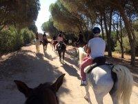Salida al campo con los caballos