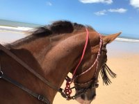 One of our horses on the beach