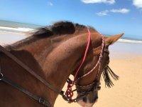 Uno de nuestros caballos en la playa