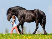 horse with girl for a walk in the field
