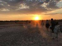 与马匹在海滩上的日落