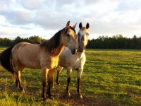 two horses with the sun