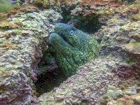 海洋动物Estepona