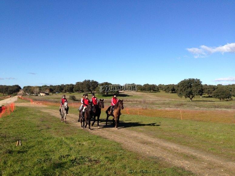Carrera de ponis en tierra