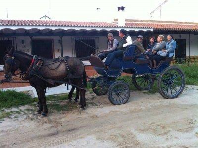 Visita il villaggio di El Rocío in una mulo