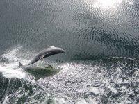 鲸类在船附近