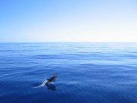 海豚在海洋中