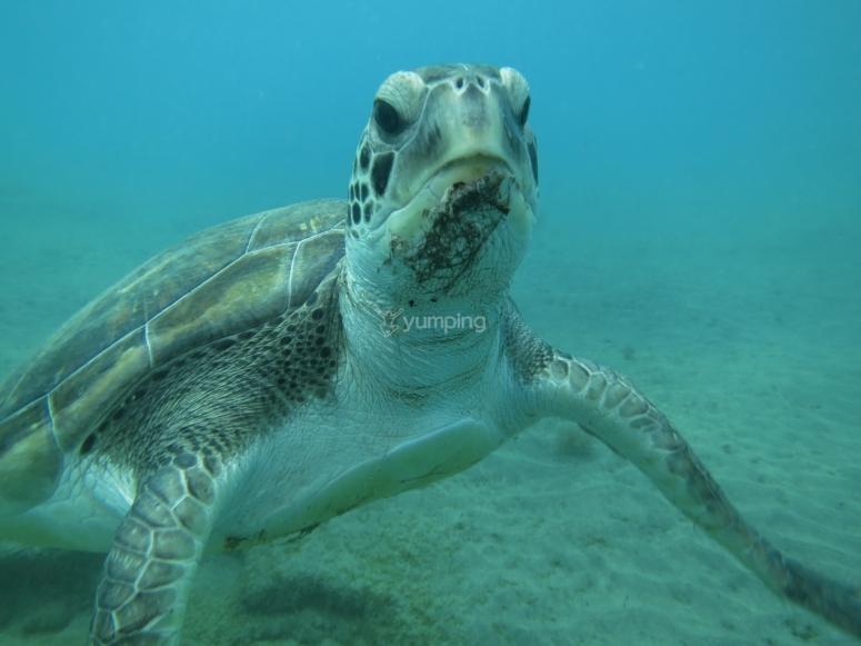 海龟之间的潜水
