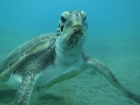 Varios puntos de inmersión con tortugas