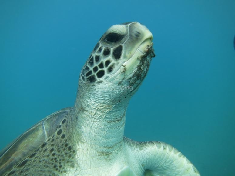Inmersión con tortugas