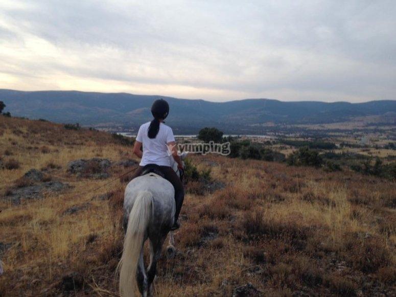 欣赏马的美景