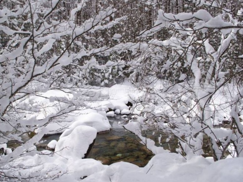 Stream under the snow