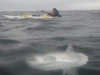 皮划艇翻车鱼独木舟探险群岛Proteguidas设备的独木舟组