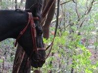 caballo esperando
