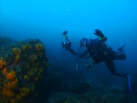 Corals of the Mediterranean