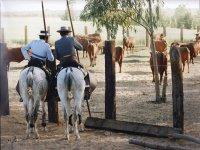 A caballo vigilando las reses