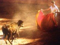el arte del toreo
