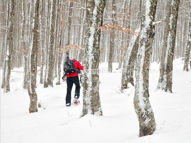 rutas por el bosque.