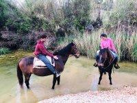 尽情享受水中的马