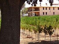Los cultivos vinícolas
