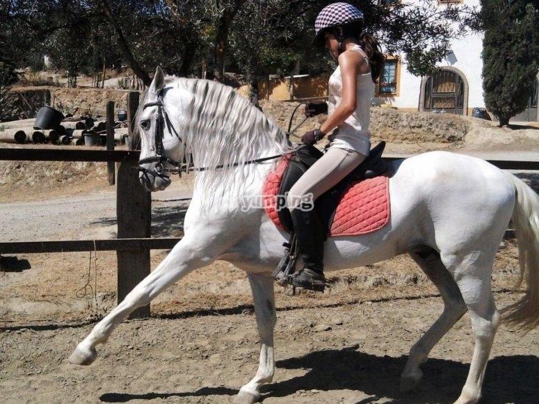 Impara a cavalcare un cavallo