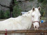 caballo preparado