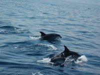 Una carrera de delfines