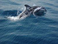 Un delfín
