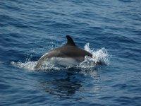 Un delfín saludándonos