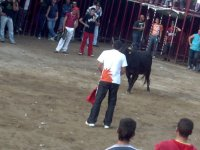 La vaca a la espera del mozo