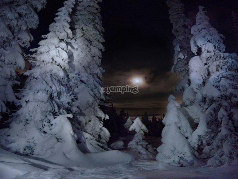 Paisaje nocturno nevado