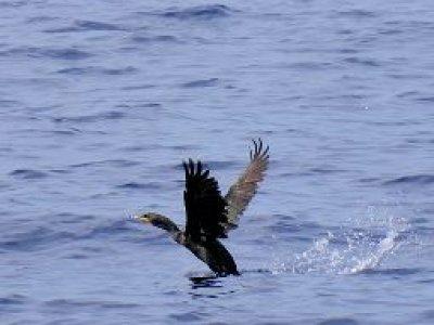 Solmaspaz Pesca