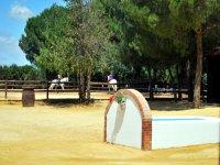 Beginners horseback riding course, 2h, Carmona