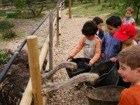 与孩子喂养母鸡驼鸟排练室