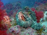 Fauna del fondo marino
