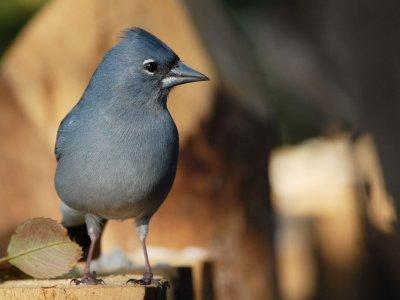 Birding Canarias Senderismo