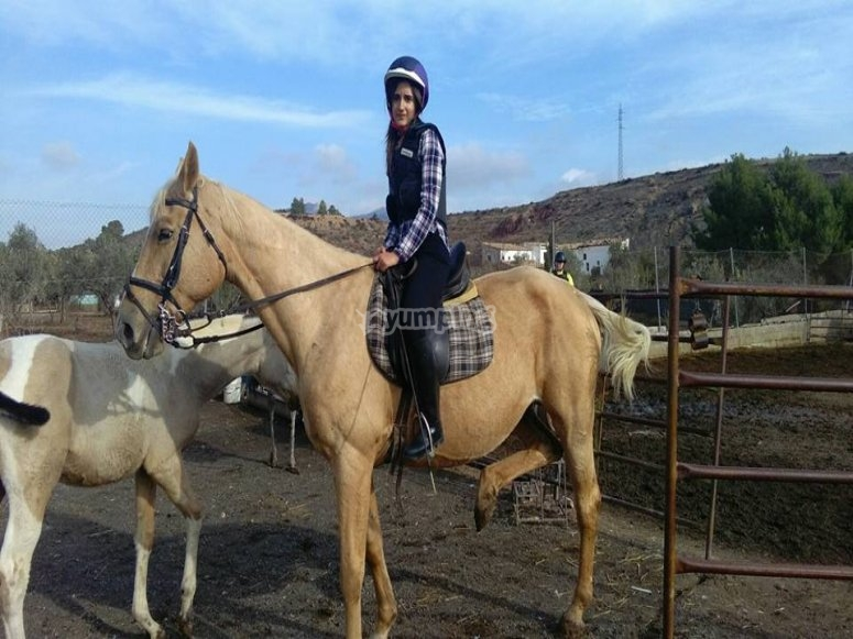 Media hora de clase de equitación