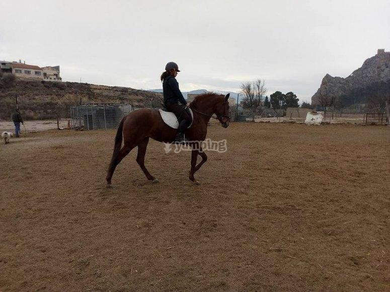 Circuito di equitazione all'aperto