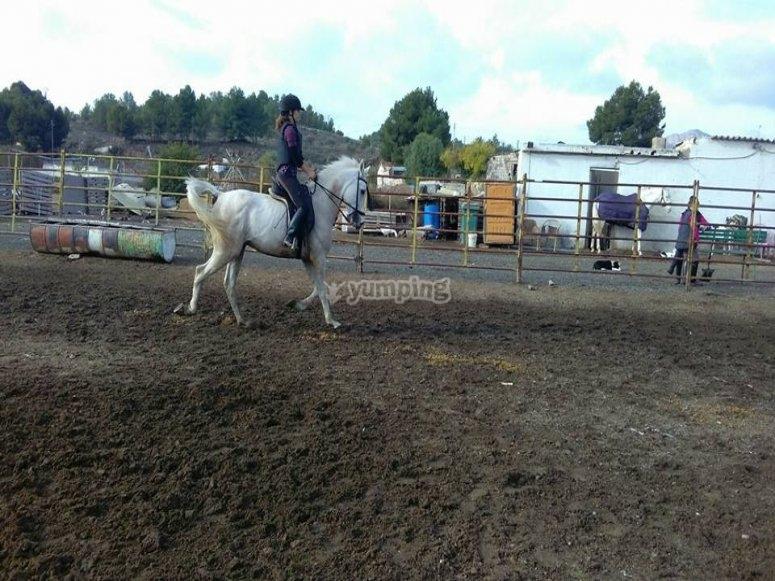 Clase de equitación en Sax