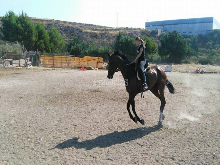 Pista de equitación Sax